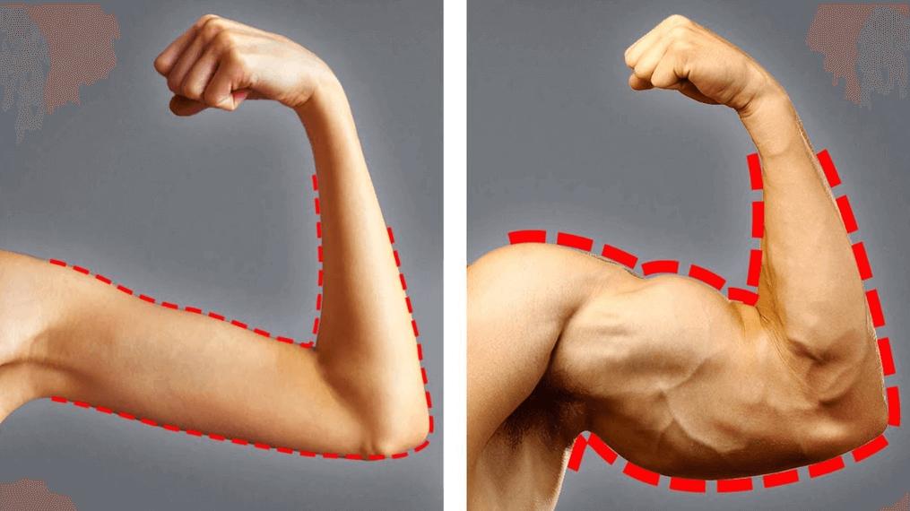 Quels aliments manger pour prendre du muscle photo